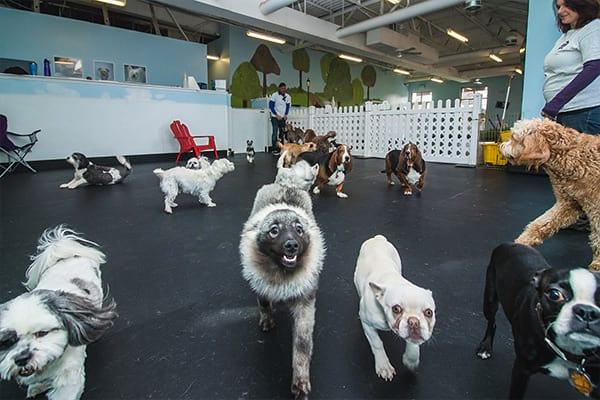 Dog Daycare interior