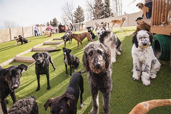 Dog Daycare facility