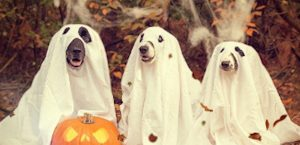 dogs dressed as ghosts