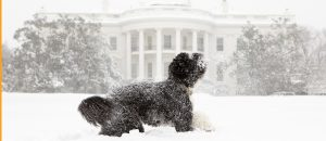 dog at white house