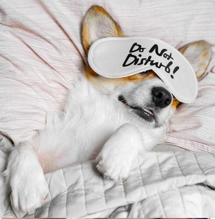 Dog sleeping in an eye mask