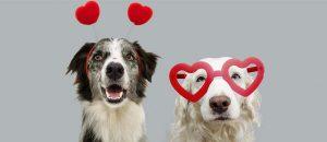 valentines dogs