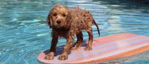 puppy on boogie board