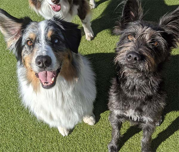 dogs on the play yard